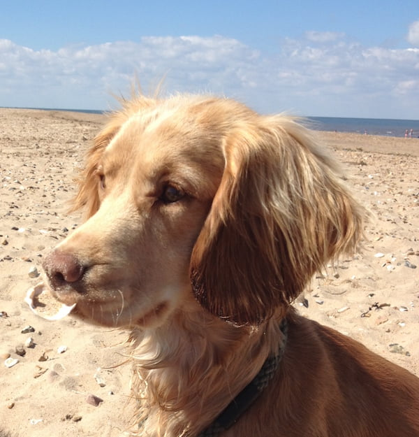 Doglost Appeal - Can you help find Louie, Aika and Anna