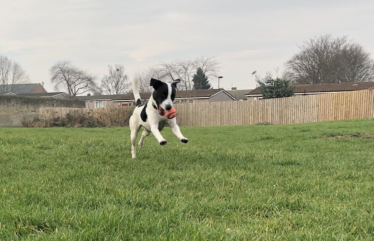Tips on how to settle your dog in a new house from Helen Motteram