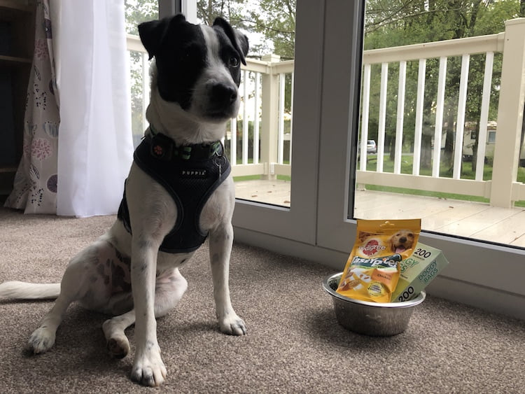 The Bowland Fell Park doggy welcome pack