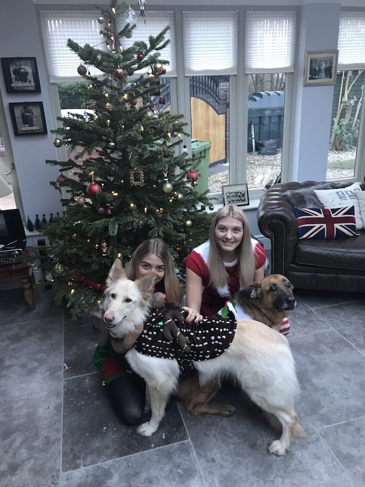 Doglost appeal - can you help find Isla, Harper and Rossi?