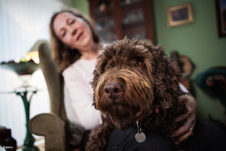 Rolo the Therapy Dog
