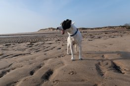 Dog friendly places to go and things to do in Alnmouth, Northumberland