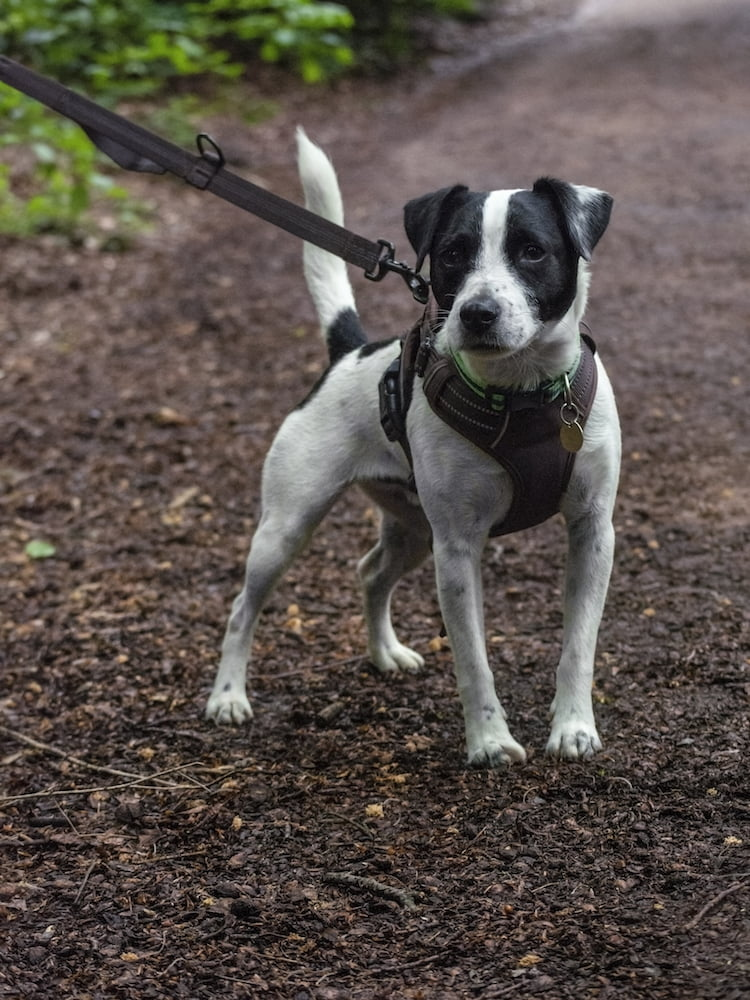 Lara Trewin from Dogfit UK shares her tips on running with your dog