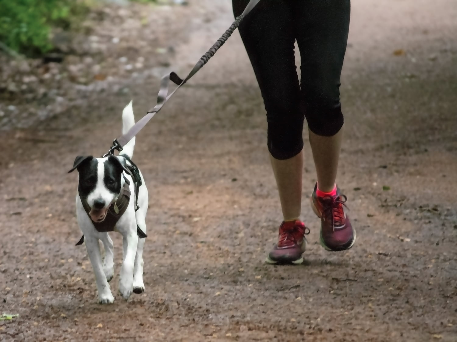 Tips on how to run with your dog