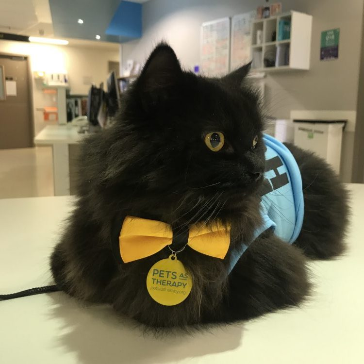 London the Pets as Therapy Cat