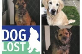 Doglost Appeal Amy Archie Polly