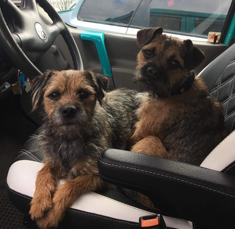 Amy and Archie Doglost Appeal