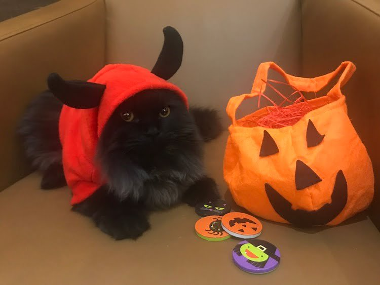 Pets as Therapy Cat London dressed up for Halloween