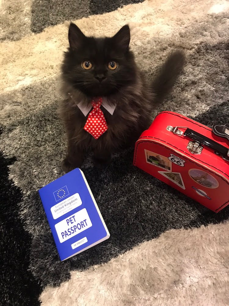 London the Pets as Therapy Cat preparing for a holiday