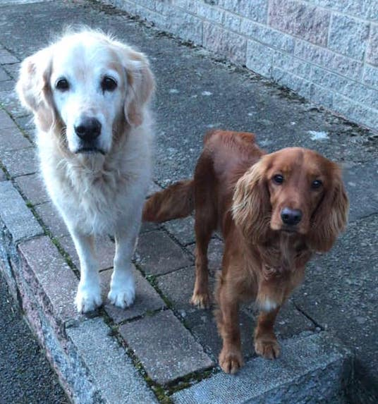 Missing Doglost case Polly from Weardale