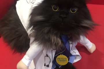 Pets as Therapy Cat London