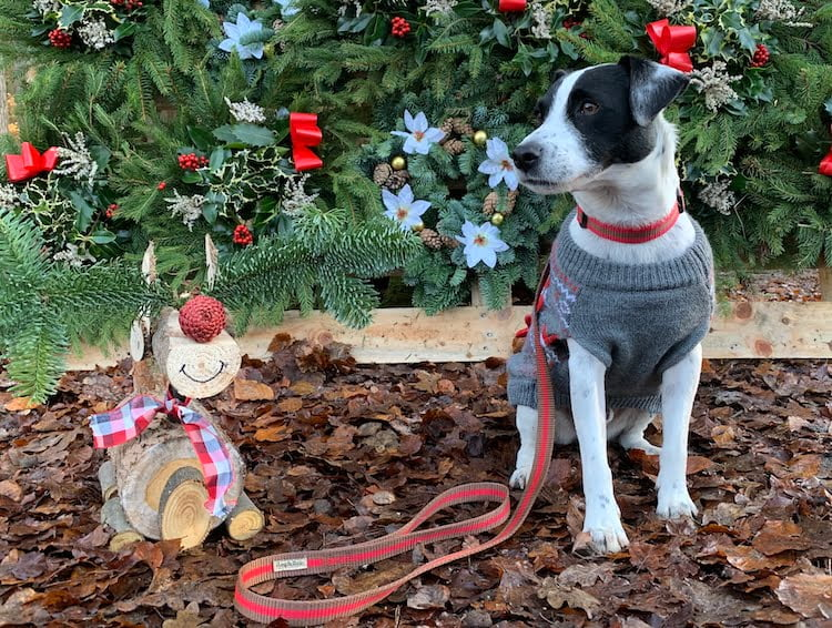 Christmas gifts terrier owner lead and collar set