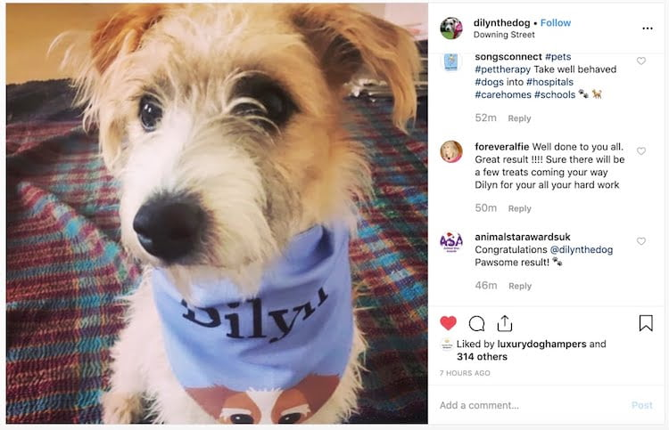 How to dress your dog like Dilyn personalised bandana