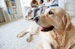 How to help your dog cope during coronavirus lockdown
