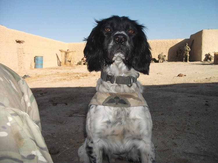 National Military Working Dogs Memorial - Theo