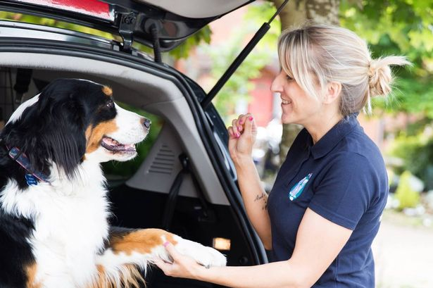 Woman putting pet in car safely