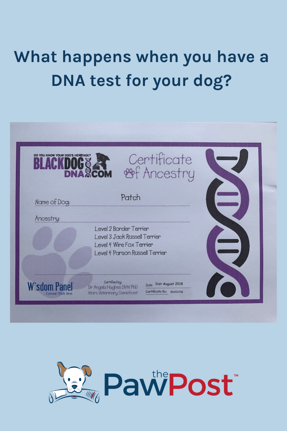 What happens when you have a DNA test for your dog
