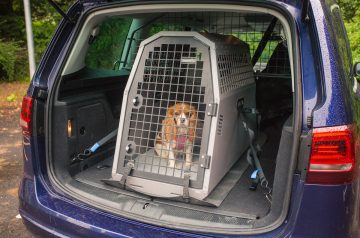 Dog in car crate showing how pets should travel safely