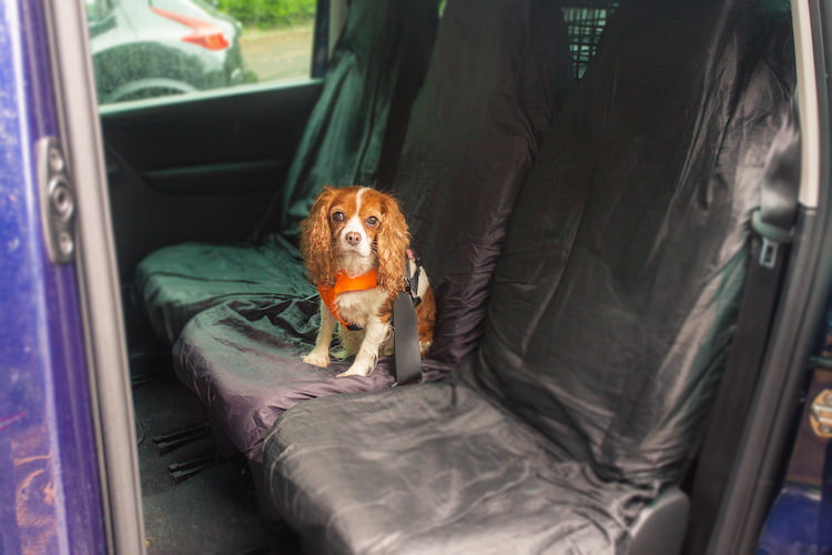 Dog in car wearing seat belt showing how pets should travel safely