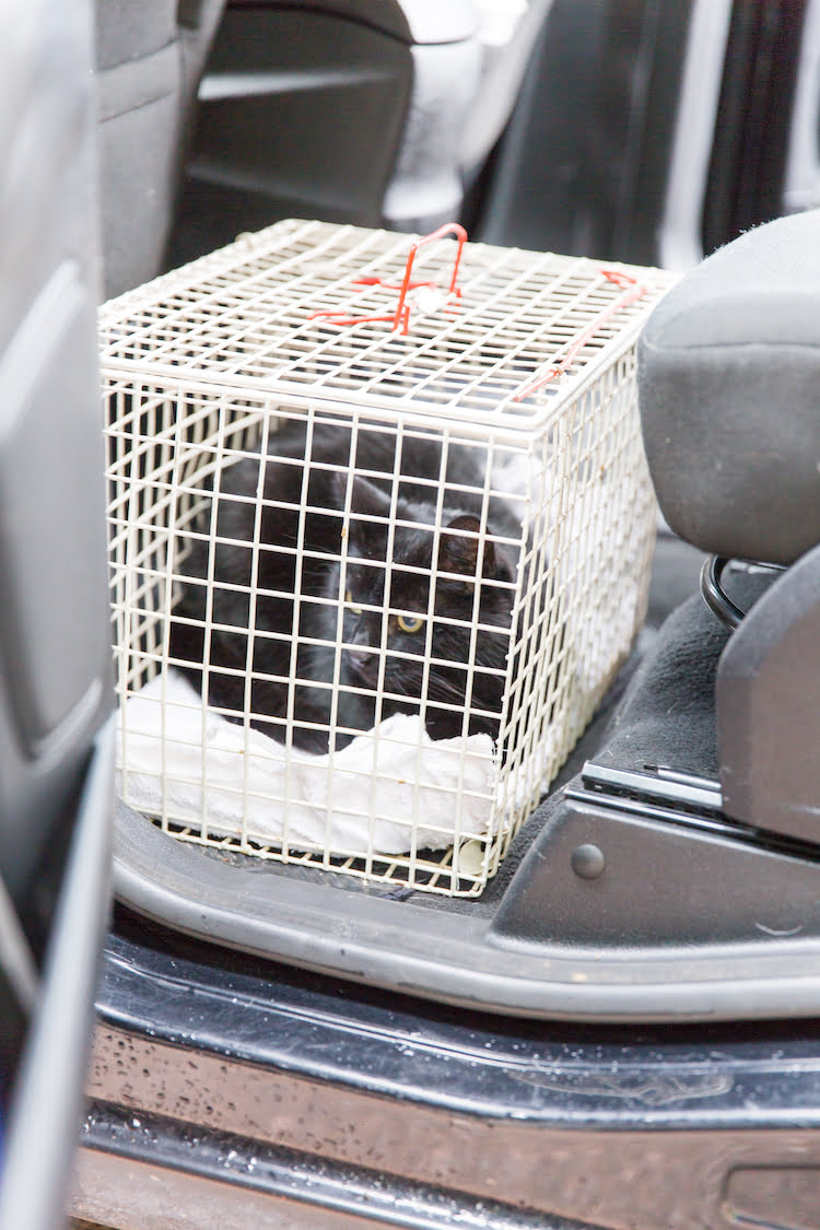 Cat in crate in car demonstrating how to transport a cat safely